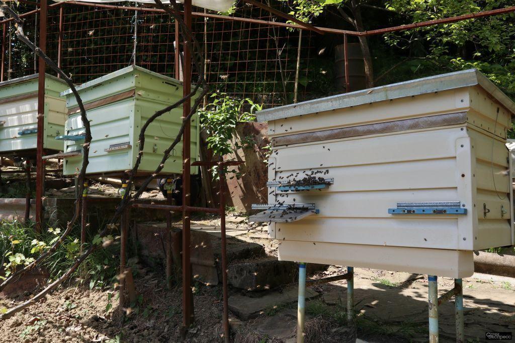 Продам мёд в Сочи
