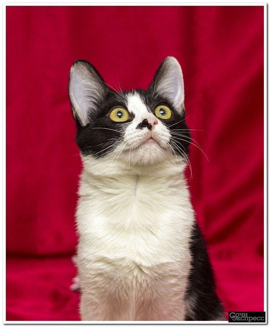 Котёнок Кассиопея в добрые руки!