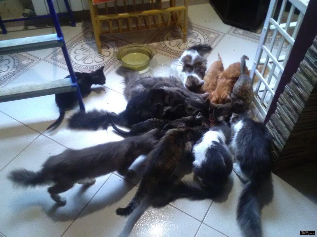 Отдам в добрые руки подросших котят