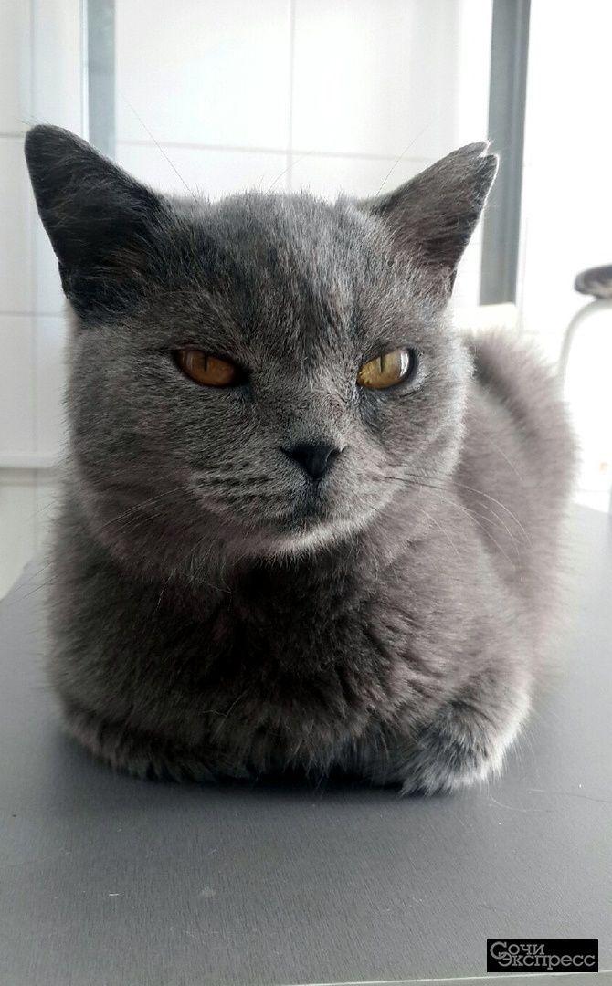 Кошка в добрые руки