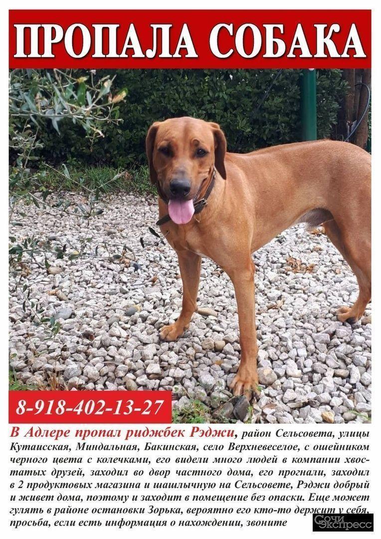 Пропала собака в Адлере район Сельсовета