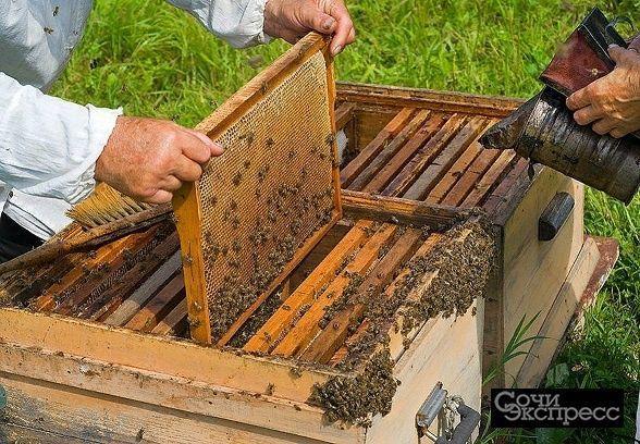 Продажа пчел
