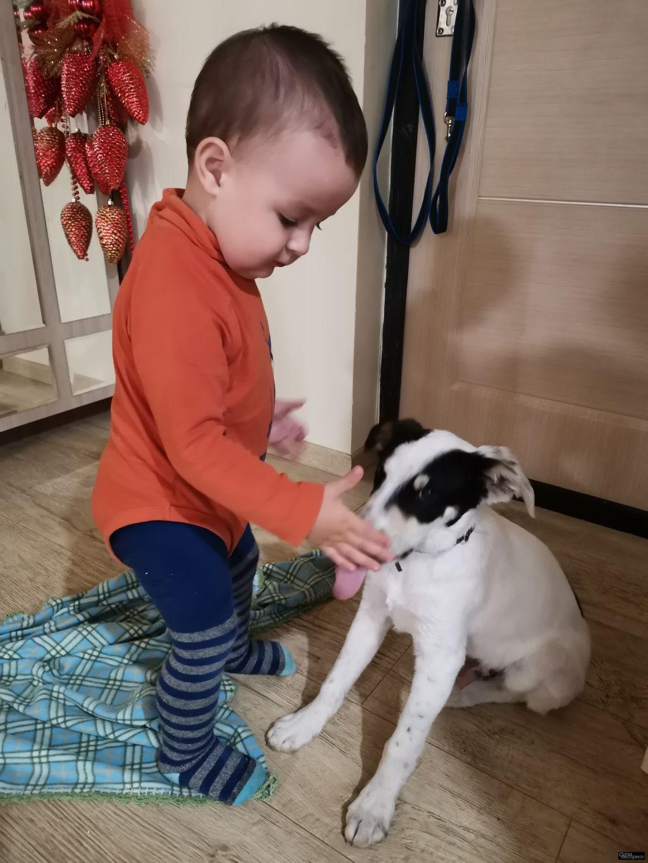 Найден щенок 4 месяца в Весёлом