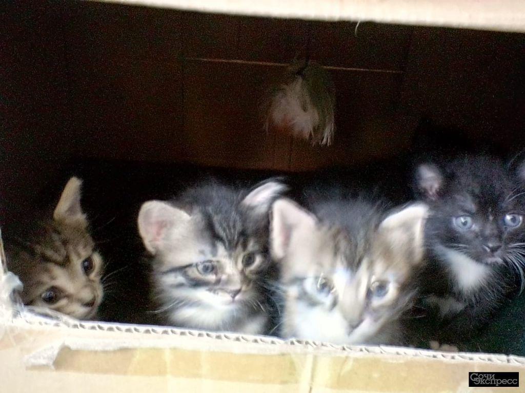 Котята, Бесплатно, привезем бесплатно.научены кушать и ходить в туалет.