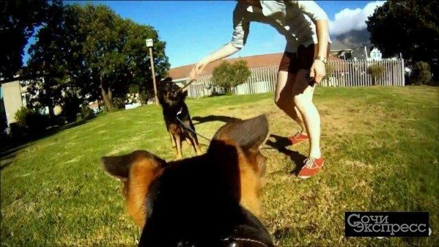 Крепление для собак gopro