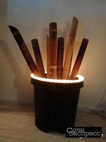 Бамбук для дизайна и интерьера