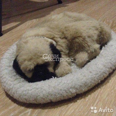 Спящий мопс (д/декора)